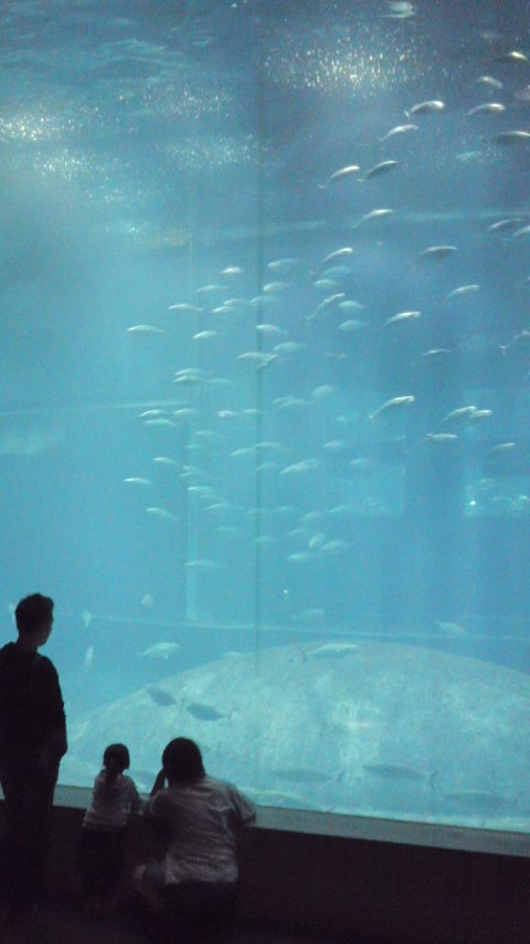 【写真】回流魚は酔う
