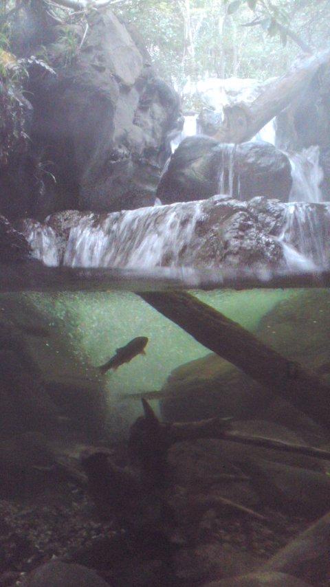 【写真】川の魚