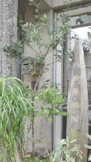 【旅】20111126お昼のハヤシライス